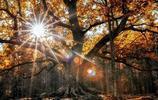 芬蘭森林裡的童話世界