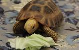 動物圖集:烏龜
