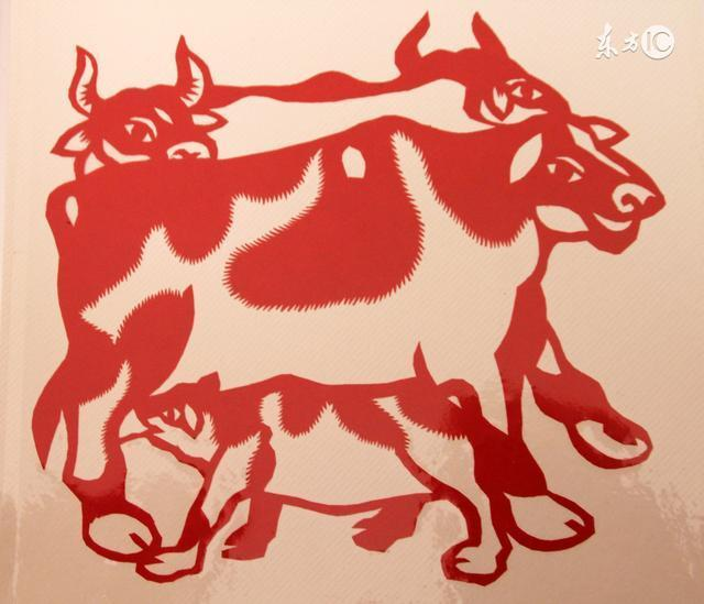 生肖牛 就是牛 牛牛牛牛牛!