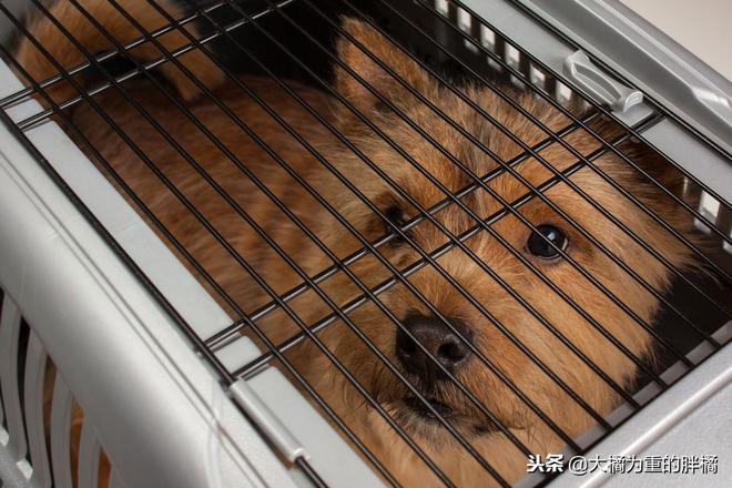 沒養狗前以為每天喂點狗糧就行了,但養了狗後才知道……養狗真累