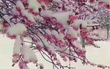 三月商洛紛飛桃花雪,商洛這些地方美爆啦!