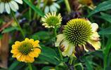 鄭東新區第一屆花卉展覽正在龍湖溼地公園展出 抓緊去看看吧