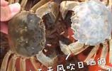 罕見!陽澄湖撈出白色大閘蟹,專家:千萬分之一的概率