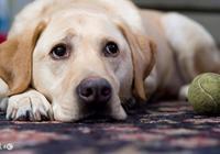 請牢記!再愛也不能讓狗狗吃的20種食物