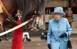 英國女王伊麗莎白二世靠賽馬賺6億 皇家衛隊一匹馬待遇超過士兵