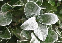霜降碧天靜,秋事促西風,二十四節氣霜降已至,霜降宜忌知多少