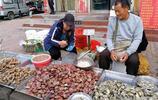菜市場鮮活小海鮮最受歡迎 活雜魚35元一斤 蝦虎八帶30元一斤