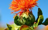 美麗的花兒惹人醉,認識一下這些花兒吧