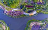 花季來了?武漢光谷花山河公園喊你來看花,看看你能認識幾種?