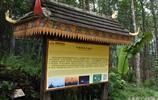 中緬邊界的打洛邊境有這樣一棵樹,卻同時屬於兩個國家,霸道!