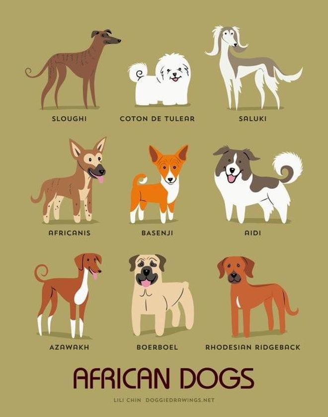 22張圖秒懂狗狗祖籍!養了外國狗,你知道它來自哪個國家嗎?