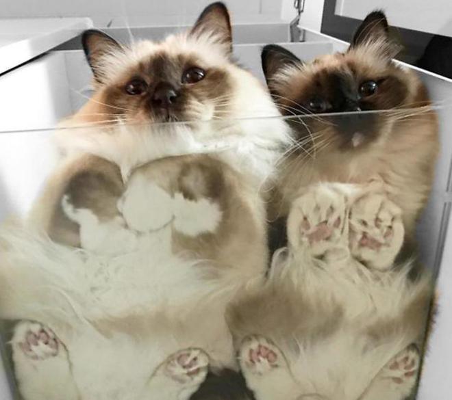 """""""別惹我,我挺凶噠!我的喵臉就能壓扁你!""""10張貓咪趣圖真搞笑"""