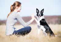 狗狗天生愛玩,如果主人肯陪它玩這些遊戲,它會更愛你