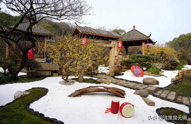 江南著名的賞梅勝地之一無錫梅園,豬年來臨前已經有濃濃的年味了
