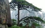 實拍 中國最古老的十顆古樹,最後一棵更是見證了華夏之路