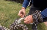 大哥發現家中院子有生物在纏綿,細看後強行將其分開