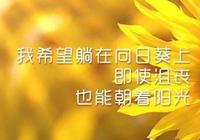 美好的一天開始,願你能像向日葵一樣,迎著陽光向上,早安!
