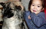 3歲娃娃跟著家庭犬密林探險,10天后狗狗獨自回家見人就咬褲腳