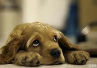 狗狗為什麼會哭?這五個原因你都知道嗎?