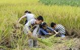 回眸小時候幹過的農活,10張圖10個場景,哪一張勾起了你的回憶