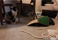 玳瑁貓被笑醜八怪,它默默用地墊把自己蓋起來讓媽媽心疼抱緊