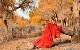 額濟納胡楊林,三千年不朽神話,在炫目的金黃裡,驗證愛情永恆
