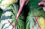 """買西瓜要挑母的才好吃,這樣""""吃西瓜""""才能玩出新界線"""