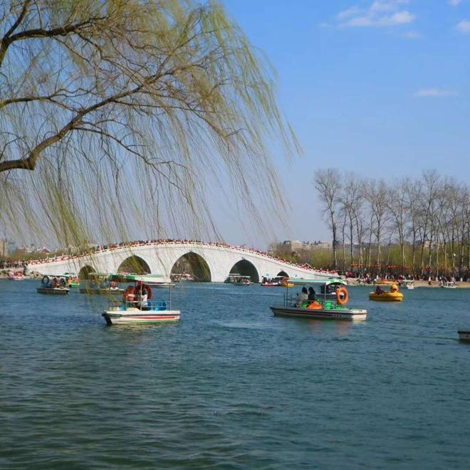 迎來最佳觀賞期!北京最大賞櫻地進入人山人海模式,僅有一個月