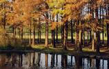 休閒娛樂好去處《上海共青國家森林公園》15元門票親民全天候