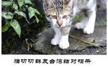 去臺灣專門吸了貓,還讓我的貓友們和灣灣的流浪貓結了對子(一)