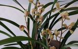 蘭花:質樸文靜,淡雅高潔