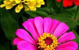 長假逛榕城 人在花中游