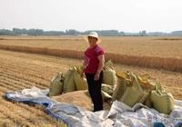 農村小夥把地頭的破爛貨變廢為寶,環保還掙錢,每天淨賺4000元!