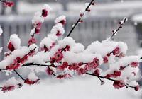 遙知不是雪 為有暗香來 王安石的《詠梅》原來也抄自古人