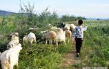 孩子暑假幫媽媽放羊,城裡同學都在補課,新學期孩子發現了差距