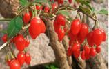 你家空地還在種花草?現在都流行種這8款好看又好吃的果樹