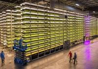 摩天大樓裡的垂直農場:未來你連做農民的資格都沒有!