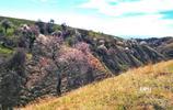 """中國最美的""""花千谷"""":漫山遍野杏花,是春天最後的主角"""