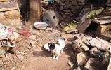 濟南生態區繼續拍攝山區農村內容,週末上山看望一位老人家
