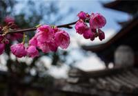 花的世界,花的寄語,一種花,一個故事,一段愛情,你瞭解幾種