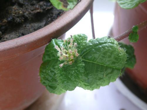 如此油綠茂盛的吸毒草你見過嗎?注意這幾點你也能做到!