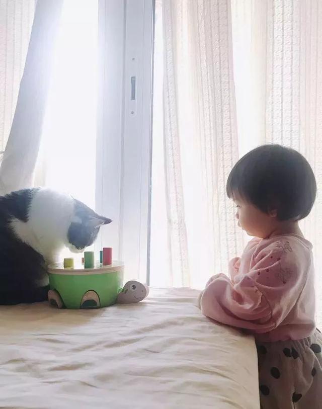 喵喵已經淪為我家一歲半寶寶的愛寵了