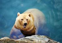 不怕熊出沒,就怕再也沒有熊出沒——除了熊大熊二還認識別的熊嗎