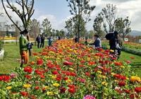 彌勒太平湖森林公園,在冬天遇見你開花的樣子