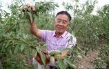 """山西68歲農民大叔種植1種""""懶漢果"""",10元1斤供不應求,看啥樣子"""