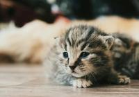 有些人拍著拍著就散了,有些貓拍著拍著就是一輩子