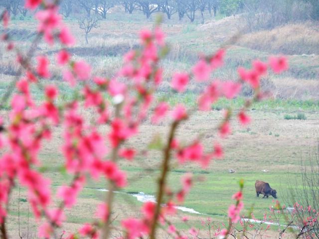 在那桃花盛開的地方:連州