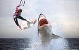 衝浪者遭遇大白鯊的瞬間