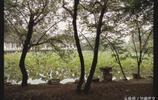 你去過揚州的瘦西湖嗎?瘦西湖的名稱由來又是怎樣的?