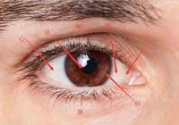 中醫是這樣從人的眼睛判斷人體內五臟病變的